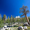 Cathedral Peak peeping over the trees. John Muir Trail, the Sierra Nevada Mountains in California, United States.