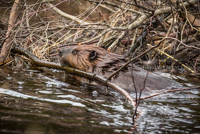 Busy Beaver Building