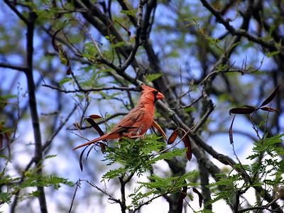University of Hawai`i at Manoa Campus Birds