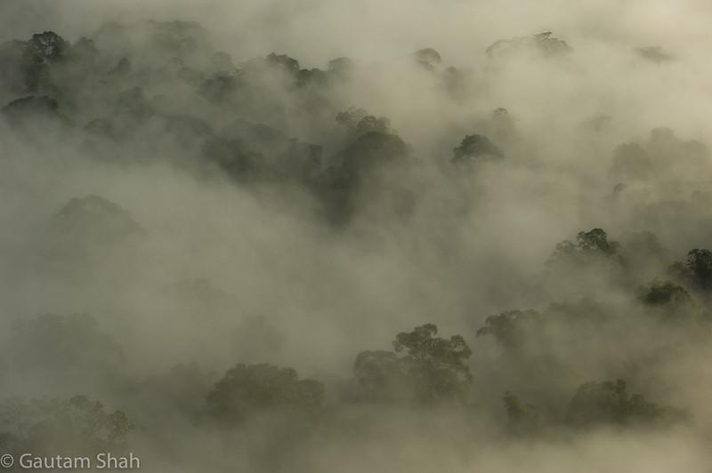 Danum Valley National Park - Borneo, Malaysia