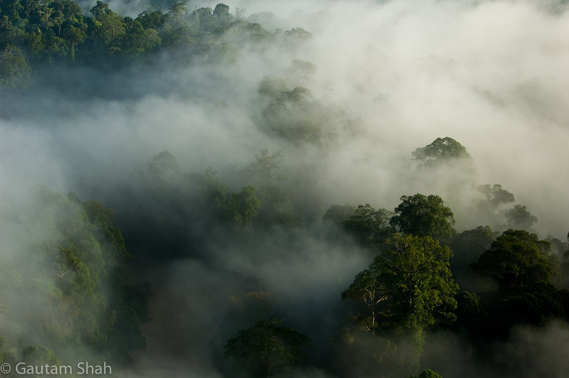 Danum Valley National Park - Borneo, Malaysia