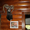 Wild Game Trophy Signs,  DiBond Brushed Aluminum Metal Example