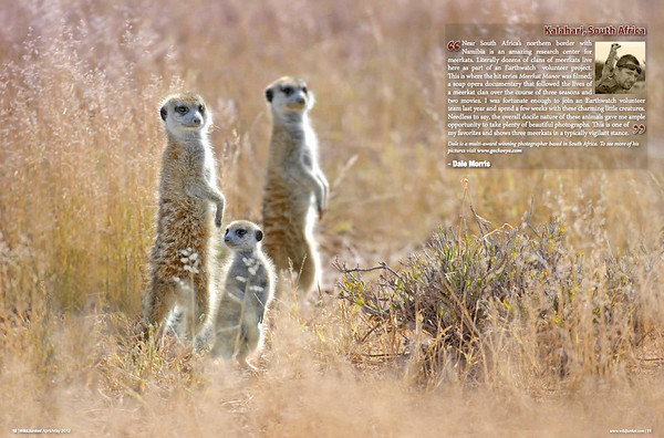 Meerkats in the Kalahari by Dale Morris