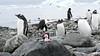 Pengie in Antarctica