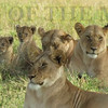Faces of the Mara