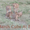 Marsh Cubs at Play