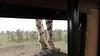 Cheetah Visit
