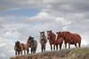 AAA03716 horses on ridge