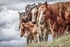AAA03768 horses ridge big sky