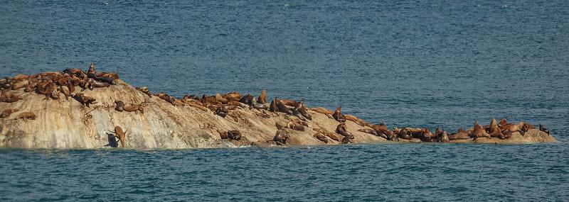 AAA00904 sea lions though window