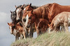 AAA03780 more horses