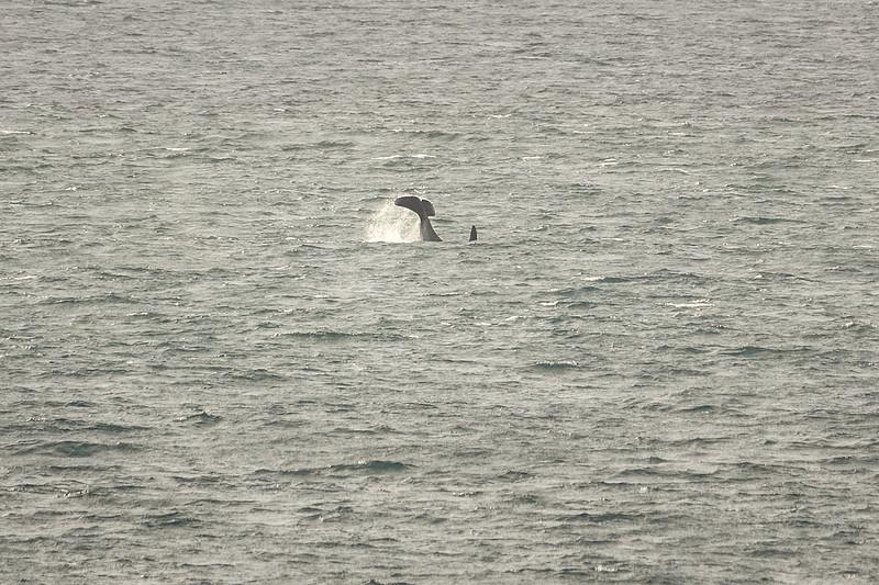 AAA02017 one orca