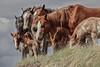 AAA03780 more horses 1