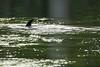 IMG_4622 Loch Ness Monster