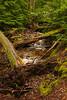 AAA02365 creek