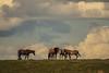AAA03630 horses