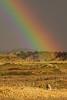 AAA02560 PD with rainbow