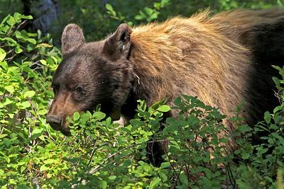 IMG_8932 bear