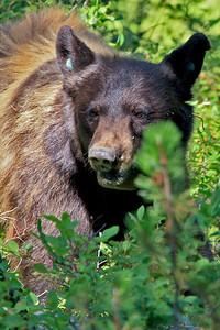 IMG_8885 bear