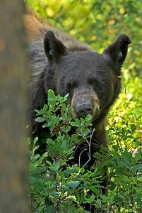 IMG_9005 bear