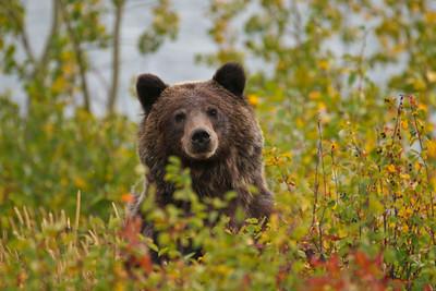 IMG_6100 bear