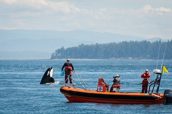Wildlife of Puget Sound