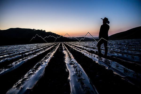 Surveying the Crop, Central Coast, CA