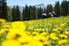 Amongst the Flowers in the Northern Sawatch Range, CO