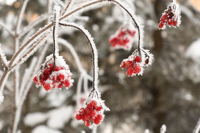 Winter frost (1)