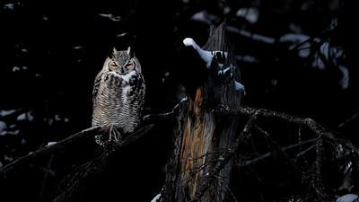 Owl glow
