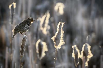 Evening light in the marsh