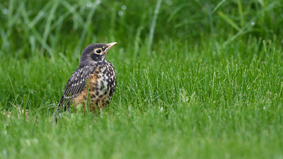 The last fledgling