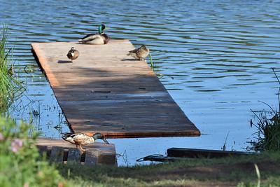 Canoe Launch Adaptation