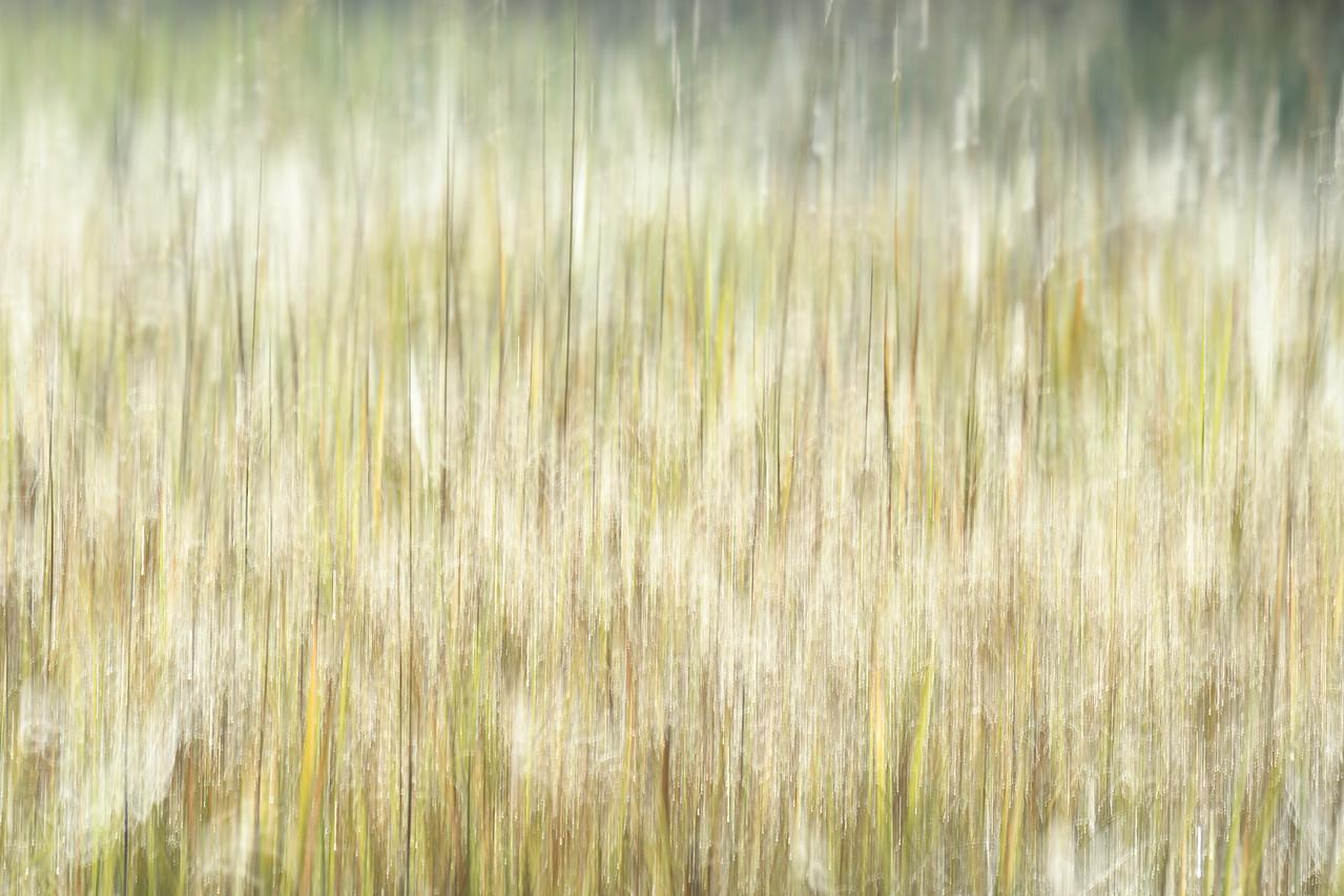 Sparkly Grass (2)