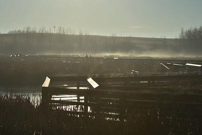 Wetland mist