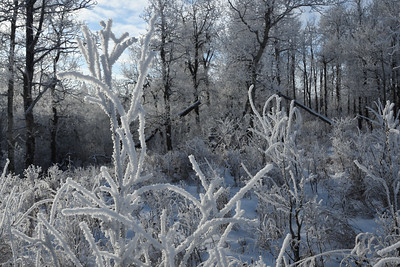 Winter frost (6)