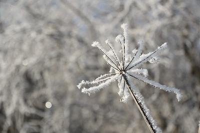 Winter frost (5)