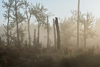 Misty morning sunshine