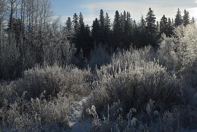 Winter frost (4)