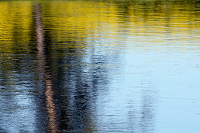 Canola fields on the banks of the upper Sturgeon River are reflected in the slowly moving water.