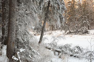 Winter frost (2)