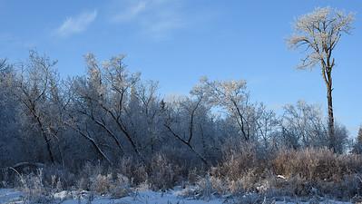 Winter frost (3)