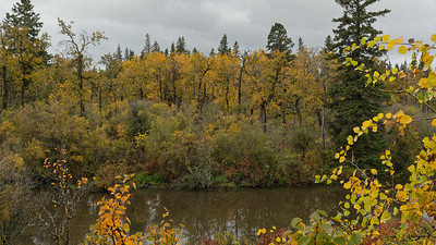 Oxbow Lake foliage
