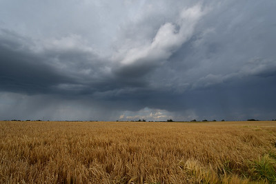 Storm over the barley field