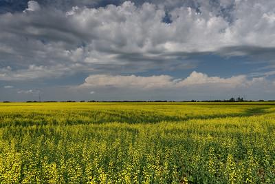 July on the Prairie