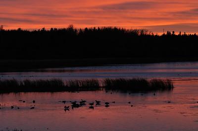 Fall twilight