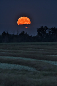 Rising Full Harvest Moon