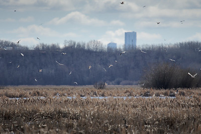 Gulls and towers