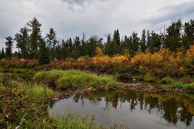 Beaver  dam in early fall