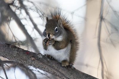 Squirrel shot of the week